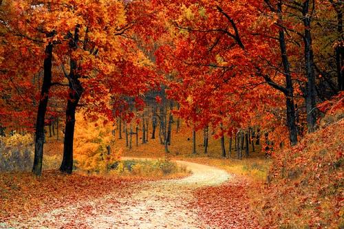Beginning to feel like Autumn….
